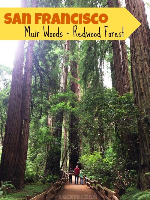 Muir Woods Redwood Forest
